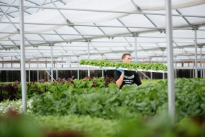 Baywater Farms and the Economic Necessity of Hydroponics
