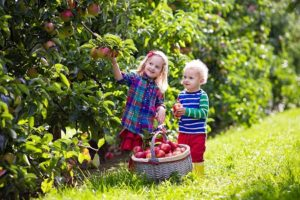 Family Farm Tips: Etiquette for a Visit