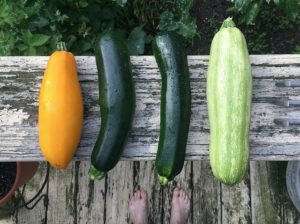 heirloom summer squash
