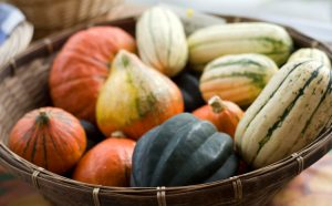 Tips for Starting Your Own CSA