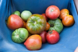 Why You Should Invest In Heirloom Tomatoes