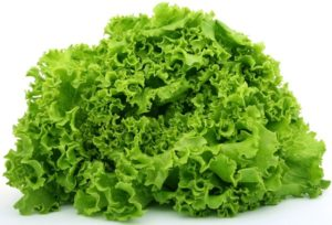 Going Over Different Types of Lettuce