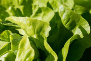 Ways to Eat Lettuce That You Can Suggest to Consumers