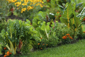 What People Are Saying About Hydroponic Produce