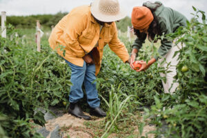 How a CSA Helps Save Money For You