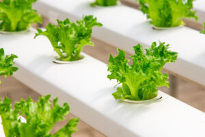 Reviewing Different Kinds of Hydroponic Systems