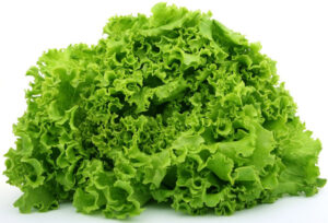 Knowing When Lettuce Has Gone Bad