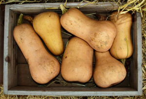 Reviewing Different Varieties of Squash